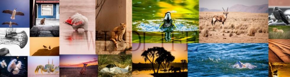 Collage of wildlife photos